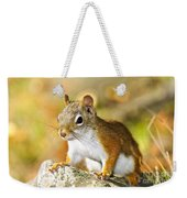 Cute Red Squirrel Closeup Weekender Tote Bag