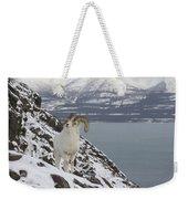 Dall Sheep Ovis Dalli Ram, Yukon Weekender Tote Bag