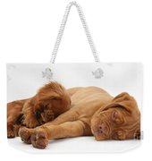 Dogue De Bordeaux And Cavalier King Weekender Tote Bag