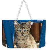 Domestic Cat Felis Catus Kitten, Germany Weekender Tote Bag