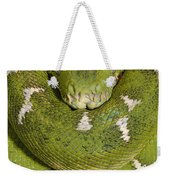 Emerald Tree Boa Corallus Caninus Weekender Tote Bag by Pete Oxford