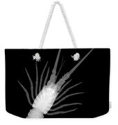 Florida Spiny Lobster X-ray Weekender Tote Bag