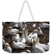 Gannet Birds Showing Fencing Behavior Weekender Tote Bag