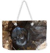 Gray Squirrel Weekender Tote Bag by Ted Kinsman