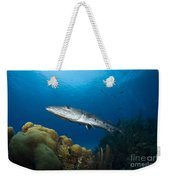Great Barracuda, Belize Weekender Tote Bag