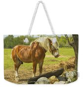 Horse Near Strone Wall In Field Spring Maine Weekender Tote Bag