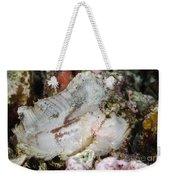 Leaf Scorpionfish, Indonesia Weekender Tote Bag