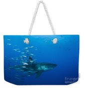 Male Great White Shark And Bait Fish Weekender Tote Bag