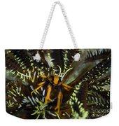 Orange And Brown Elegant Squat Lobster Weekender Tote Bag