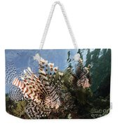 Pair Of Lionfish, Indonesia Weekender Tote Bag