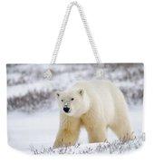 Polar Bear, Churchill, Manitoba Weekender Tote Bag