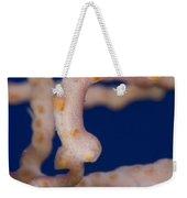 Pygmy Seahorse On Sea Fan, Papua New Weekender Tote Bag by Steve Jones
