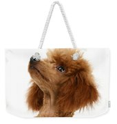 Red Toy Poodle Weekender Tote Bag