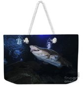 Sand Tiger Shark, Blue Zoo Aquarium Weekender Tote Bag
