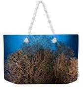 Sea Fan Seascape, Belize Weekender Tote Bag