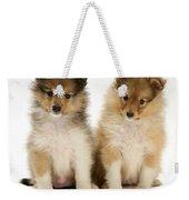 Sheltie Puppies Weekender Tote Bag by Jane Burton
