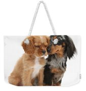 Spaniel & Dachshund Puppies Weekender Tote Bag by Mark Taylor