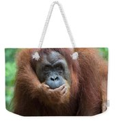 Sumatran Orangutan Pongo Abelii Mother Weekender Tote Bag
