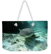 Tawny Nurse Shark Nebrius Ferrugineus Weekender Tote Bag