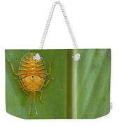 Tessaratomid Nymph Papua New Guinea Weekender Tote Bag by Piotr Naskrecki