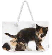 Tortoiseshell Kitten With Baby Weekender Tote Bag