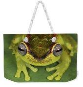 Tree Frog Hyla Rubracyla At Night Weekender Tote Bag