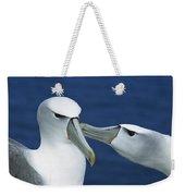 White-capped Albatross Thalassarche Weekender Tote Bag