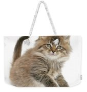 Maine Coon Kitten Weekender Tote Bag