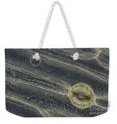 Amaryllis Leaf Epidermis Weekender Tote Bag
