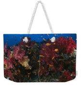 Anthias Fish Swim Near A Reef Wall Weekender Tote Bag