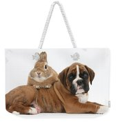 Boxer Puppy And Netherland-cross Rabbit Weekender Tote Bag by Mark Taylor