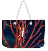 Bright Red Crab On Fan Coral, Papua New Weekender Tote Bag by Steve Jones