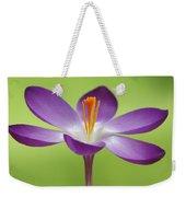 Dutch Crocus Crocus Vernus Flower Weekender Tote Bag