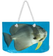 Longfin Spadefish, Papua New Guinea Weekender Tote Bag
