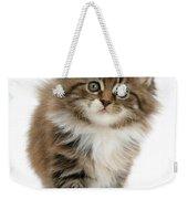 Maine Coon Kitten Weekender Tote Bag