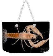 Miami Cave Crayfish Weekender Tote Bag