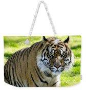 Sumatran Tiger  Weekender Tote Bag