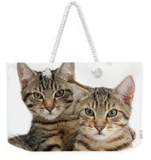 Tabby Kittens Weekender Tote Bag