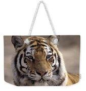 Tiger, Qinhuangdao Zoo, Hebei Province Weekender Tote Bag