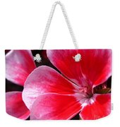 Zonal Geranium Named Candy Fantasy Kiss Weekender Tote Bag