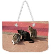 3 Cats Looking Pensive Weekender Tote Bag
