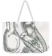 Illustration Of Heart Anatomy Weekender Tote Bag by Science Source