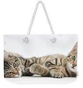 Kitten Companions Weekender Tote Bag