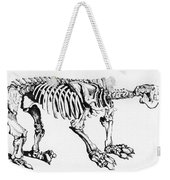 Megatherium, Extinct Ground Sloth Weekender Tote Bag