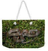 Northern Ringneck Snake Weekender Tote Bag
