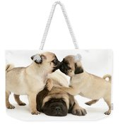 Pug And English Mastiff Puppies Weekender Tote Bag by Jane Burton