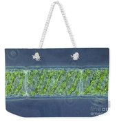 Spirogyra Sp. Algae Lm Weekender Tote Bag