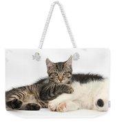Tabby Kitten & Border Collie Weekender Tote Bag