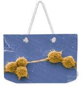 Water Biofilm With H. Vermiformis Cysts Weekender Tote Bag by Science Source