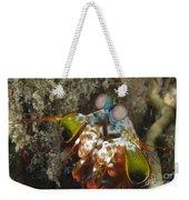 Close-up View Of A Mantis Shrimp, Papua Weekender Tote Bag